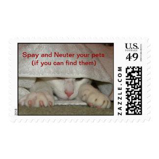 Spay y neutralice a sus mascotas (si usted puede…