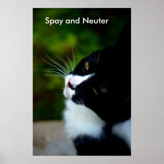 Spay y neutralice el poster