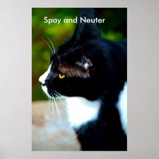 Spay y neutralice el poster II