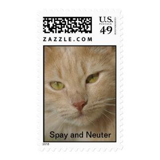 Spay y neutralice el sello