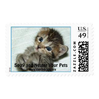 Spay y neutralice su sello de los mascotas 2