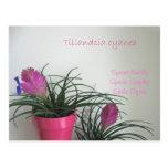 Speak Kindly Pink Quill Postcard