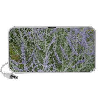 Speaker:  Lavender Growing
