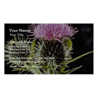 Spear thistle, cirsium vulgare  flowers Double-Sided standard business cards (Pack of 100)