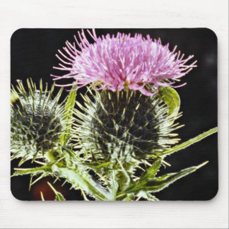 Spear thistle, cirsium vulgare  flowers mouse pad