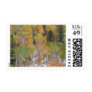 Spearfish Canyon Postage Stamps