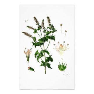 Spearmint Botanical Drawing Stationery