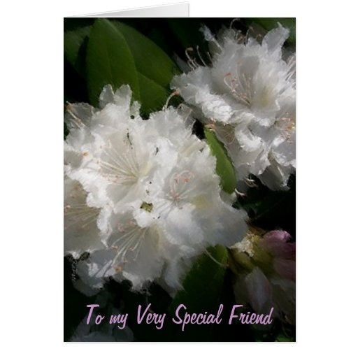 Special Friend Greeting Cards