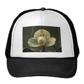 Special Orchid Hats