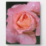 Special Roses Placas Para Mostrar