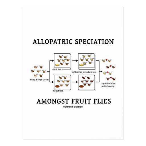Speciation alopátrico entre moscas del vinagre postal