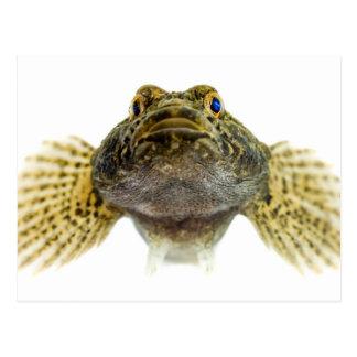 Species: Bullhead Postcard