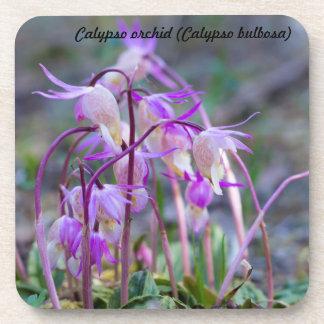 Species: Calypso orchid Coaster