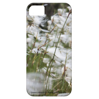 Species: Common cottongrass iPhone 5 Cases
