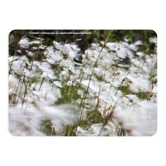 Species: Common cottongrass 4.5x6.25 Paper Invitation Card