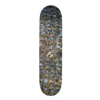 Species: Eggs of Moor Frog Skateboards