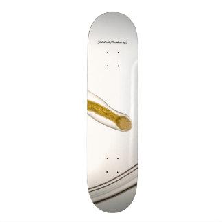 Species: Fish Leech Custom Skateboard