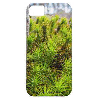 Species: Haircap moss Case For The iPhone 5