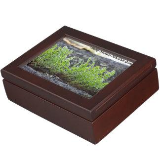 Species: Oblong Woodsia Memory Box
