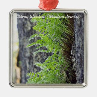 Species: Oblong Woodsia Metal Ornament