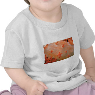 Species of orange soft coral from Fiji Tee Shirt