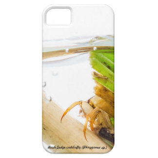Species: Rush Sedge caddisfly iPhone SE/5/5s Case