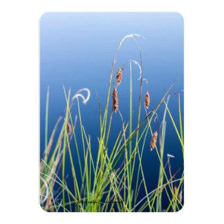 Species: Shore sedge Card