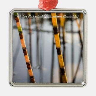 Species: Water Horsetail Metal Ornament