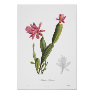 Speciosus del cactus poster