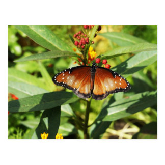Speckled Butterfly Postcard