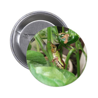 Speckled Frog in the Pepper Plant 2 Inch Round Button