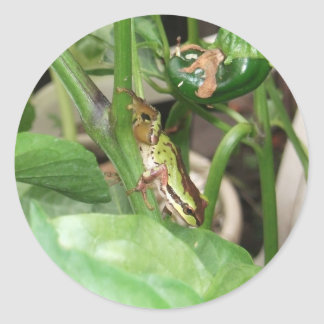 Speckled Frog in the Pepper Plant Round Stickers