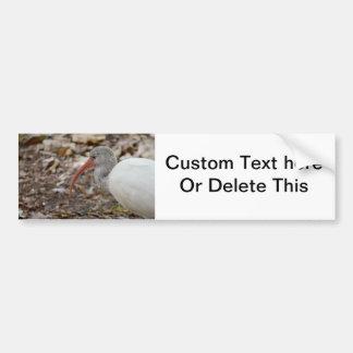 speckled headed ibis bird image bumper sticker