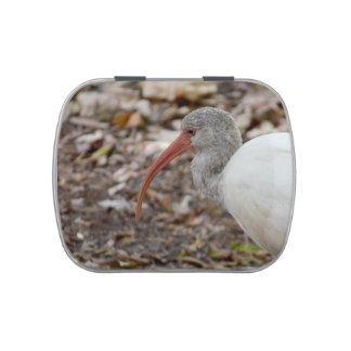 speckled headed ibis bird image jelly belly candy tin
