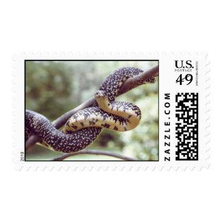Speckled King Snake Postage