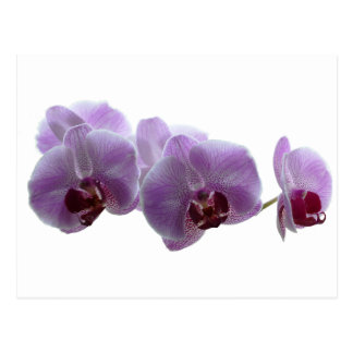 speckled orchid postcard
