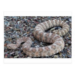 Speckled Rattlesnake Post Cards