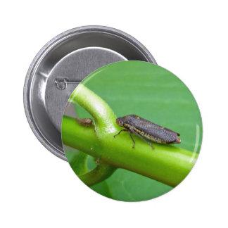 Speckled Sharpshooter Leaf Hopper Items Pins