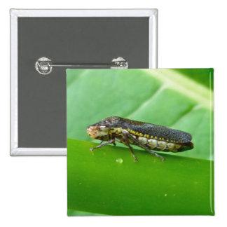 Speckled Sharpshooter Leaf Hopper Items Buttons