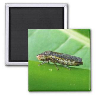 Speckled Sharpshooter Leaf Hopper Items Magnet