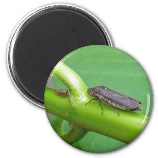 Speckled Sharpshooter Leaf Hopper Items Fridge Magnets