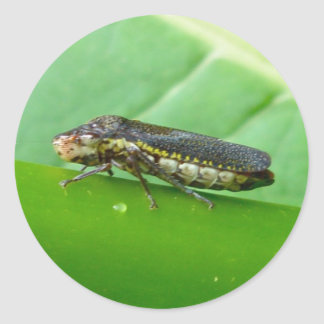 Speckled Sharpshooter Leaf Hopper Items Classic Round Sticker