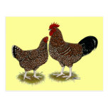 Speckled Sussex Chickens Postcard