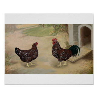 Speckled Sussex Rooster and Hen Poster