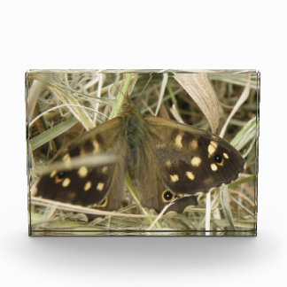 Speckled Wood Butterfly Decorative Award