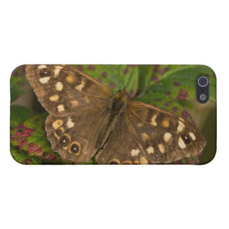 Speckled Wood Butterfly iPhone SE/5/5s Cover