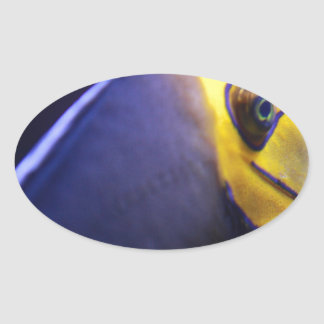 spectacled angelfish stickers