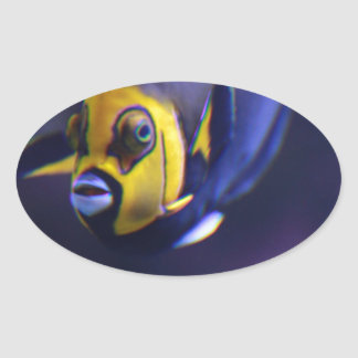 spectacled angelfish oval stickers