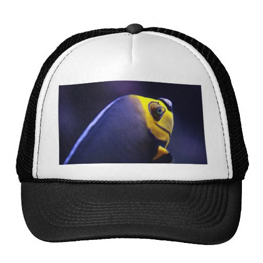 spectacled angelfish trucker hat