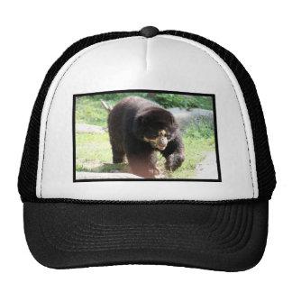 Spectacled Bear Trucker Hat